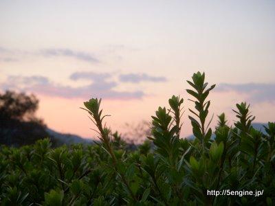 植物の黄昏
